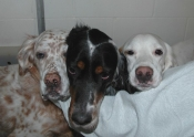 Love_those_dogs4